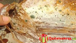 Mực khô bị mốc rửa sạch có ăn được không?