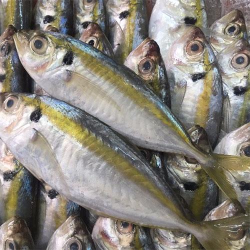 khô cá chỉ vàng là gì