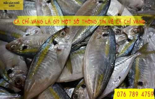 Cá chỉ vàng là gì? Một số thông tin về CÁ CHỈ VÀNG