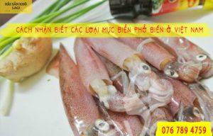 Cách nhận biết các loại mực biển phổ biến ở Việt Nam