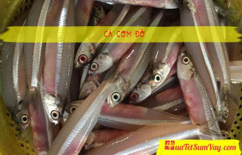 Cá cơm đỏ