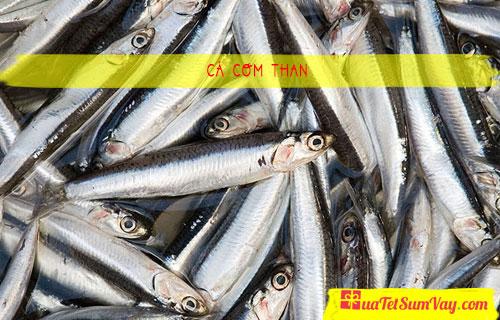 Cá cơm than