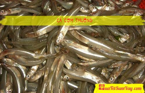 Cá cơm thường