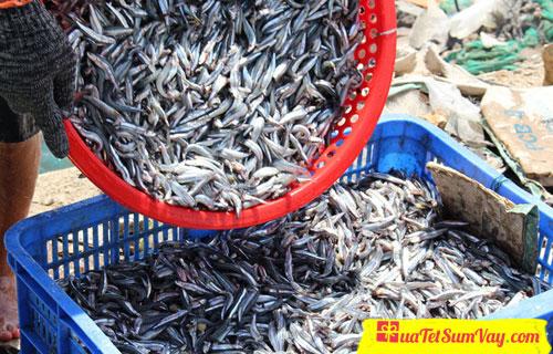 Mùa cá cơm tươi