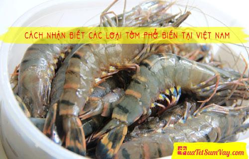 Cách nhận biết các loại tôm phổ biến tại Việt Nam
